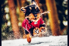 Gewinnerfoto Wintermotiv